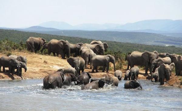 Big 7 Safaris, Addo Elephant National Park