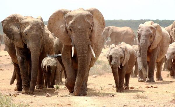 Big 7 Safaris Addo Elephant National Park