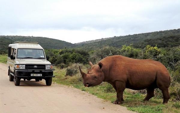 Alan Tours 4 x 4 Safaris, Addo Elephant National Park