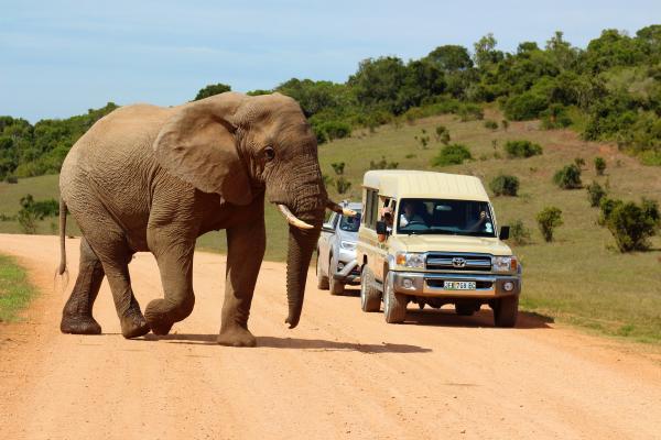 Big 7 Safaris elephant
