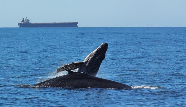 Big 7 Safaris whale watching