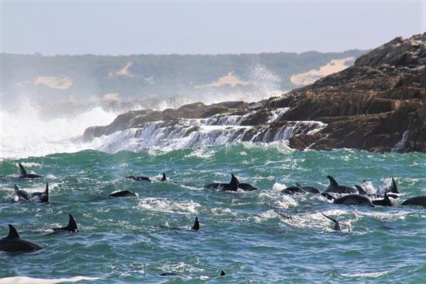 Dolphins off St Croix Island, Big 7 Safaris, Alan Tours