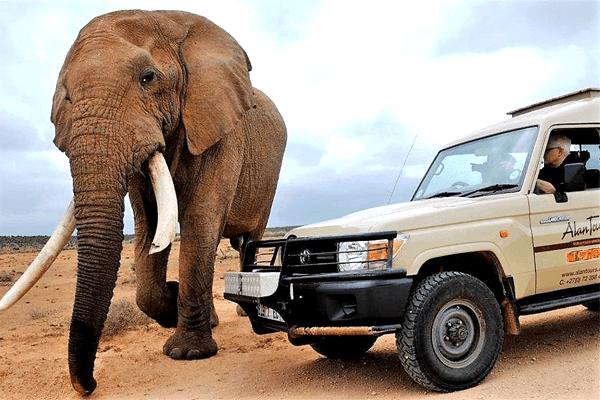 Big 7 Safaris with Alan Tours, Port Elizabeth
