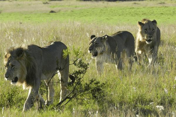 Alan Tours Safaris, Port Elizabeth, Eastern Cape, South Africa
