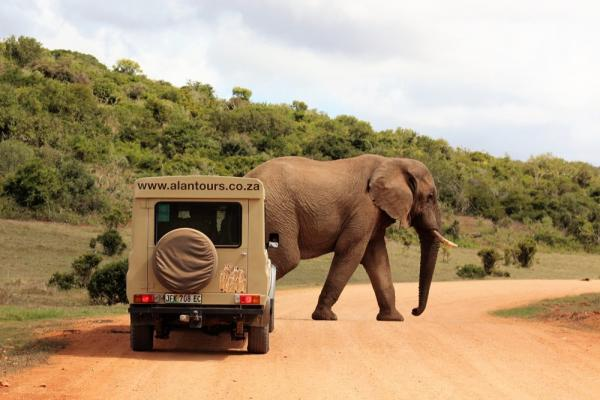 Alan Tours 4 x 4 Safaris, Addo Elephant Park, South Africa