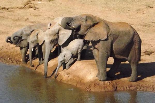 Addo Elephant National Park safaris, Alan Tours, Port Elizabeth, South Africa