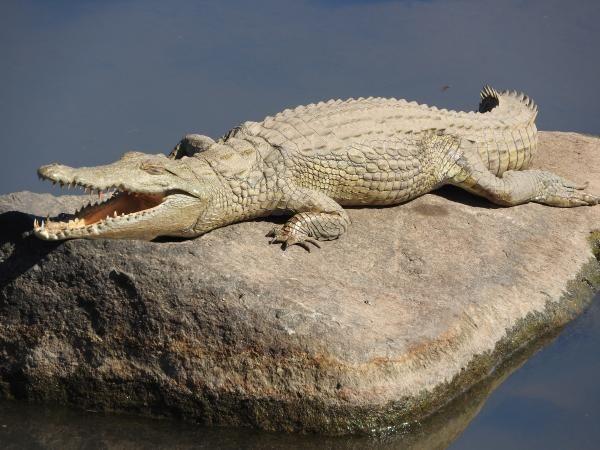 Crocodile with Alan Tours