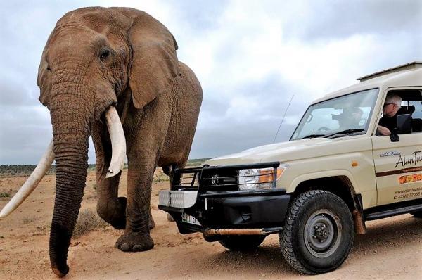 4 x 4 Safaris Addo Elephant National Park, Alan Tours, Port Elizabeth, South Africa