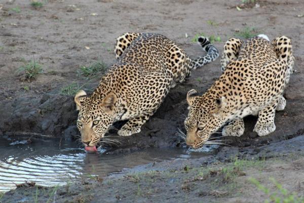 Kruger National Park, Alan Tours, Port Elizabeth, Eastern Cape, South Africa
