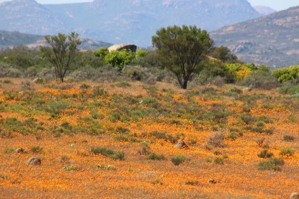 Namaqualand Tours with Alan Tours