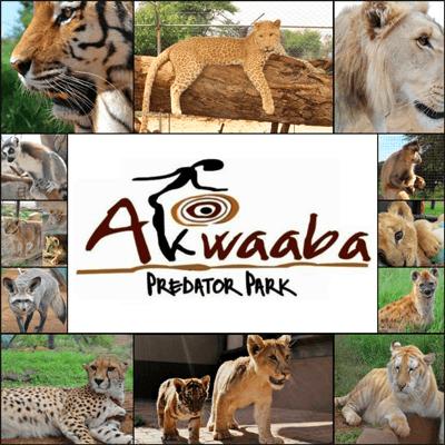 Akwaaba Predator Park Logo