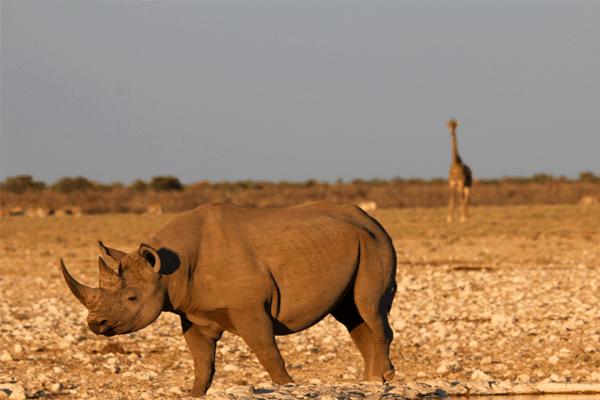 Adventure Safaris South Africa