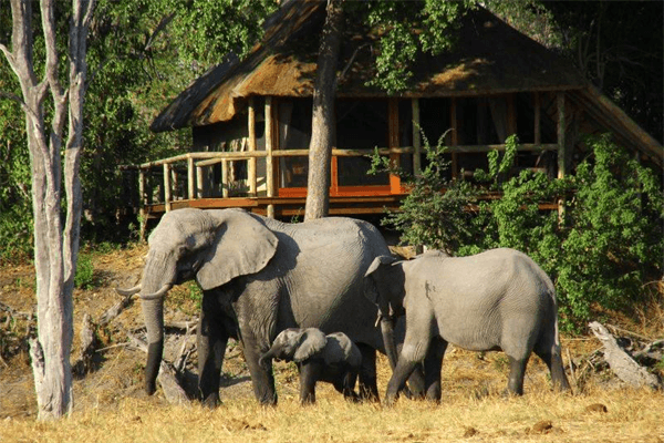 Elephants with Elzette Minnaar Tours
