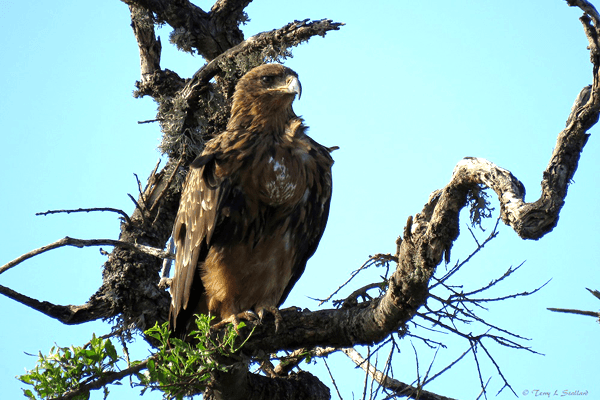 Birding at Mavela Game Lodge