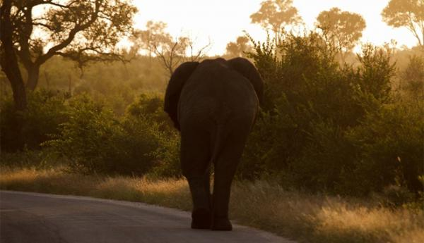 Elephant with Apex Tours & Safaris