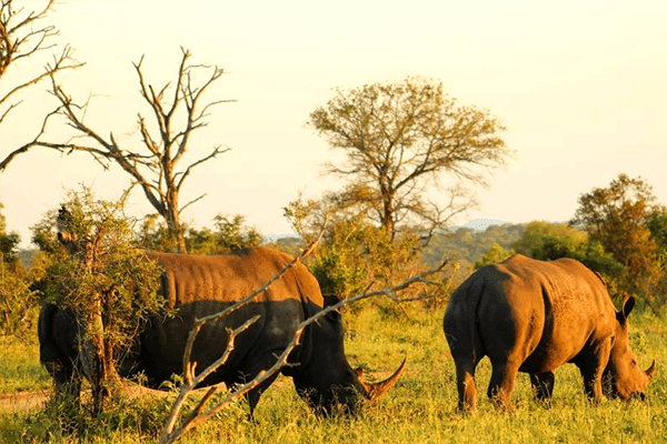 Rhinos at Elephant Herd Tours and Safaris