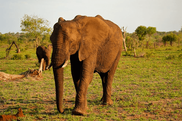 Elephants at Elephant Herd Tours and Safaris