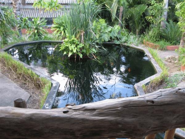 Pond at Umfolozi River Lodge & Bird Park