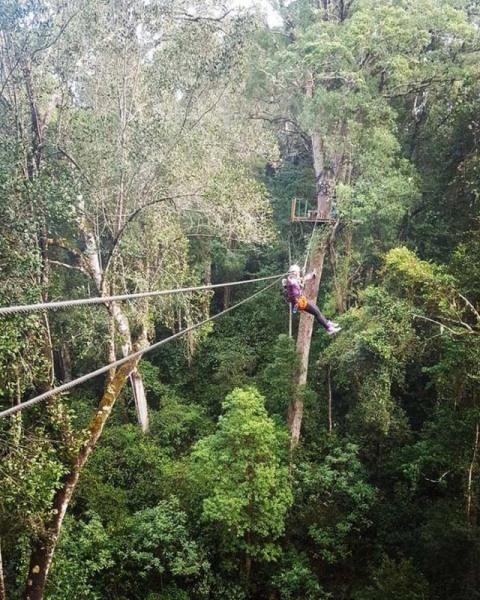 Zip Line Adventures with Tsitsikamma Canopy Tour