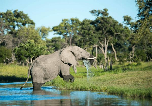 Elephants at Legend Hospitality Group