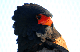 Dullstroom Bird of Prey and Rehabilitation Centre