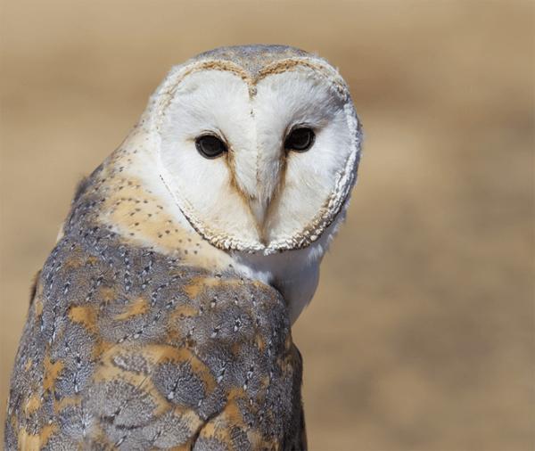 Dullstroom Bird of Prey and Rehabilitation Centre