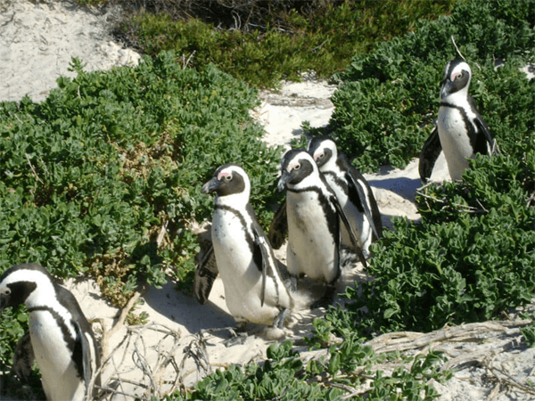 Penguins with Jaydans Premier Tours and Travel