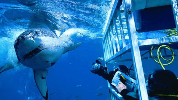 Shark experiences with Reynolds Travel Centre