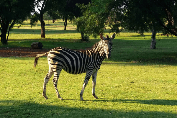 Ma Tala Tala Wildlife Nature Reserve