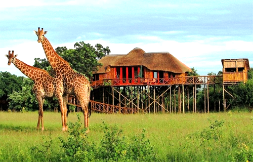 Pezulu Tree House Lodge