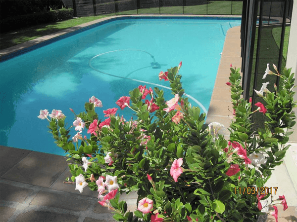 Swimming pool at Garden Cottage - Constantia